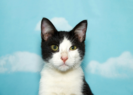 portrait of a black and white tabby kitten looking at viewer, one eye partially squinting and smaller than the other. Blue background sky with clouds. Copy space Banco de Imagens