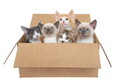 Five assorted kittens in a brown box looking up, isolated on a white background. Kitten season, kittens for sale and or free to good home