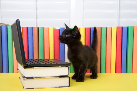 Small black kitten standing in front of a miniature laptop computer on books, with colorful books in background. Looking at computer screen.