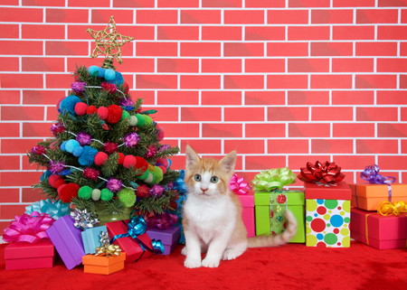 Orange and white tabby kitten looking at viewer, sitting on red fur carpet by christmas tree, decorated with yarn balls and lights, with presents around him, brick wall background Stock Photo