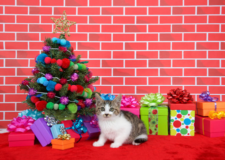black, brown and white tabby kitten looking above viewer, crouched on red fur carpet by christmas tree, decorated with yarn balls and lights, with presents around him, brick wall background