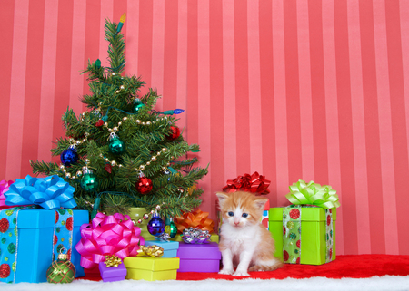 Adorable orange and white tabby kitten three weeks old sitting in a pile of christmas presents under a small tree decorated with ball ornaments and gold pearls. Copy space.