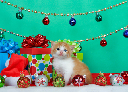 Adorable orange and white long haired tabby kitten sitting next to christmas presents with holiday ornaments, green background with copy space.