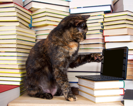 Tortoiseshell, or Torbie tortie tabby cat sitting in front of stacks of books with miniature laptop type computer, screen blank for your message.. Cat pointing at screen with one paw