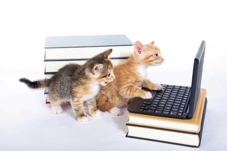 male orange tabby kitten looking at miniature laptop type computer. Female calico tortie sitting behind with mouth open. talking. Piles of books next to and under computer. paw on keyboard Foto de archivo