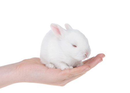Young caucasian hand holding albino white baby bunny, tired, sleeping. Isolated on white.