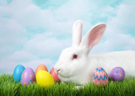 Profilo verticale di un coniglio bianco albino che giace in erba con uova di Pasqua decorate. Sfondo blu cielo pittorico.