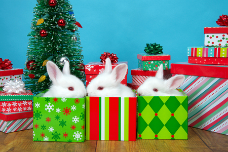 three baby white albino bunny rabbits in Christmas present boxes surrounded by more presents and a tiny tree with ornaments blinking colorful festive lights. Animal holiday fun and humor.