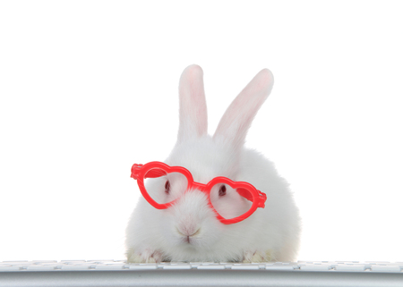 Portrait of an adorable white albino baby bunny rabbit wearing heart shaped pink glasses, paws on computer keyboard looking directly at viewer as if looking at computer monitor. Isolated