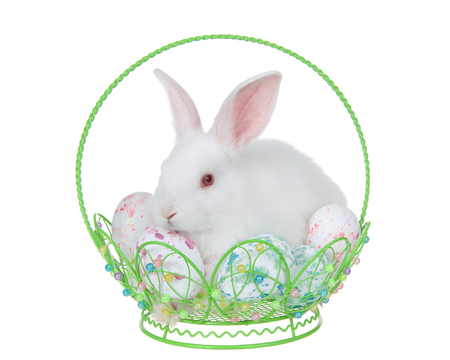 Adorable white albino baby bunny rabbit sitting in a hand crafted wire basket filled with tie die easter eggs, isolated on white background.