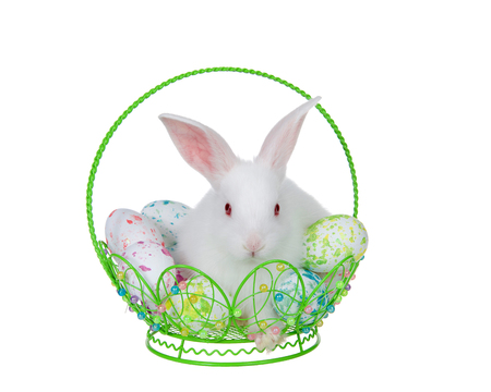 Adorable white albino baby bunny rabbit sitting in a hand crafted wire basket filled with tie die easter eggs, isolated on white background. Bunny looking directly at viewer. Stock Photo