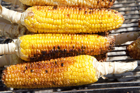 Fresh organic corn on the cob grilling on outside bbq grill. Popular fair and festival food.