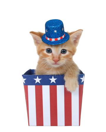 Winziges orangefarbenes Ingwer-Tabby-Kätzchen, das in einer rot-weiß-blauen patriotischen Box sitzt und einen Hut trägt, der den Betrachter mit der Pfote über der Seite direkt ansieht, isoliert auf weiß.