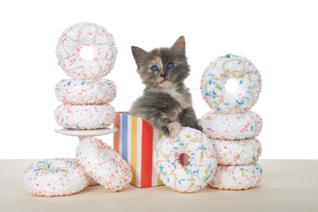 Adorable diluted tortie kitten sitting in a colorful birthday present box surrounded by white sprinkled donuts. Donut party on a wood table isolated on white.
