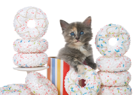 Adorable diluted tortie kitten sitting in a colorful birthday present box surrounded by white sprinkled donuts. Close up on a Donut party isolated on white. Stok Fotoğraf