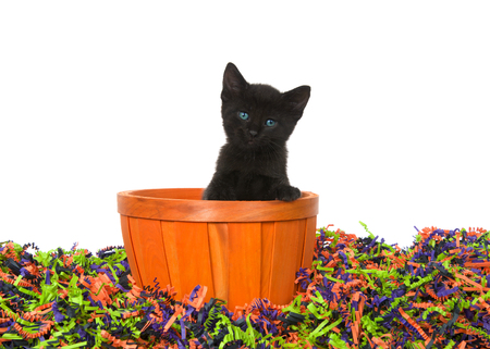 Adorable black kitten with bright blue green eyes sitting in an orange basket in confetti Halloween colors isolated on white. Stok Fotoğraf