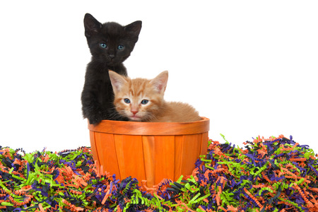 Adorable black kitten with bright blue green eyes and orange ginger tabby sitting in an orange basket in confetti Halloween colors isolated on white.