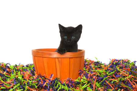 Adorable black kitten with bright blue green eyes sitting in an orange basket in confetti Halloween colors isolated on white. Stock Photo