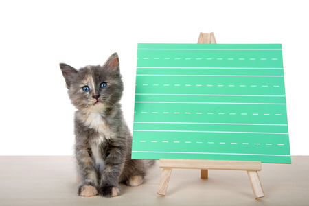 Adorable diluted tortie kitten sitting attentively on a wood floor next to a green writing chalk board, blank for your message. Isolated on white background. Stok Fotoğraf