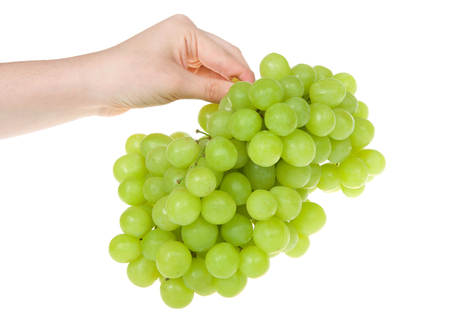 young caucasian hand holding bunch of green grapes isolated on white.  Grapes can be eaten fresh, or they can be used for making wine, jam, juice, jelly, raisins and a variety of other products.
