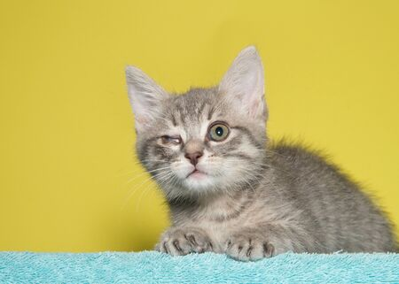 Young grey and tan tabby kitten with congenital defect of right eye, not fully opened and film membrane sealing the eye mostly closed. Lying on green blanket with mustard yellow background.