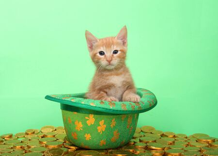 Orange tabby kitten sitting in a green leprechaun hat with silver clovers, surrounded by gold coins on a green background. Saint Patricks day animal antics