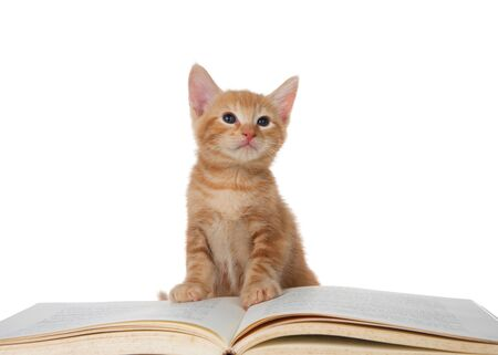 Adorable little Orange ginger tabby kitten sitting on a story book looking directly up to viewers right. Isolated on white. Education, entertainment, animal antics.