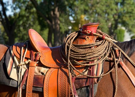 Close up on saddle on a brown horse with cowboy rope lasso curled on the saddle horn. Green trees in background.