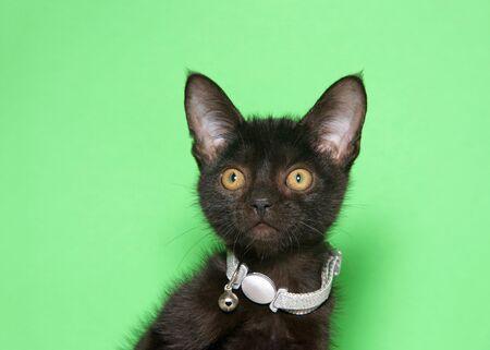 Retrato de un adorable gatito negro con un collar plateado brillante, demasiado grande para su cuello, con una campana, mirando directamente al espectador. Fondo verde con espacio de copia.