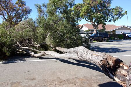 Large tree branch broken, split at the trunk from high wind velocity. Laying across lanes of traffic, blocking the roadway.