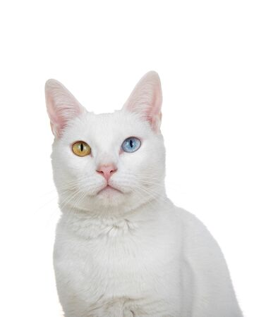 Close up portrait of a white cat with heterochromia, odd eyes, looking directly at viewer. Isolated on white background. Archivio Fotografico - 141770188