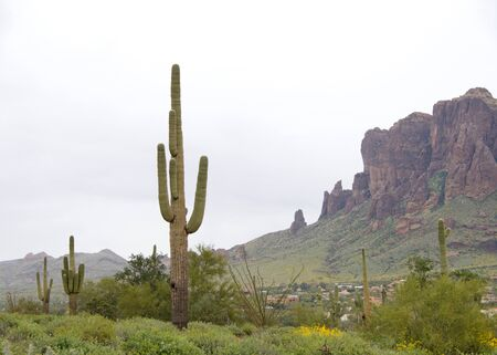Desert landscape with saguaro cactus, a tree-like cactus species in the monotypic genus Carnegiea, which can grow to be over 40 feet tall. Red rock mountains in background, typical Arizona landscape.