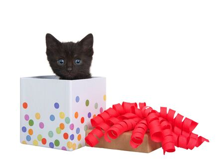 Adorable tiny black kitten with blue green eyes peaking out of a small white present box with pastel dots, lid with bright pink curly ribbon bow on top. Isolated on white.  Archivio Fotografico