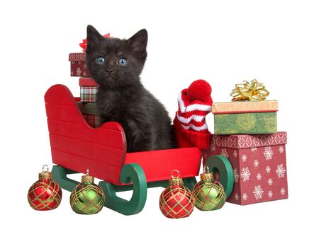 Adorable black tabby kitten sitting in red and green Christmas sleigh with miniature presents in rustic designs looking at viewer. Isolated on white. Ornaments in front and beside sleigh.
