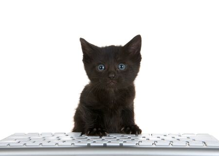 adorable tiny black kitten with blue eyes peaking over a computer keyboard isolated on white background, looking directly at viewer with perplexed expression.
