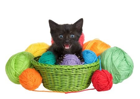 Adorable black tabby kitten with blue eyes in a green woven basket full of yarn overflowing yarn onto table, isolated on white background. Kitten looking directly at viewer with mouth open