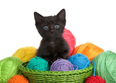 Adorable black tabby kitten with blue eyes in a green woven basket full of yarn overflowing yarn onto table, isolated on white background. Kitten looking directly at viewer.