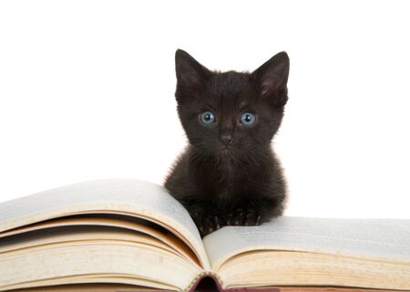 Tiny black kitten sitting on large story book looking at viewer with bright blue eyes. Isolated on white.