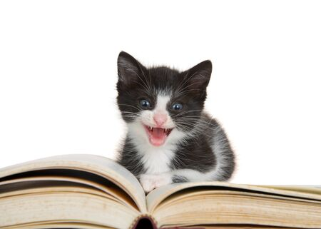 Adorable tiny black and white tuxedo kitten sitting on large story book, mouth open looking directly at viewer. Isolated on white