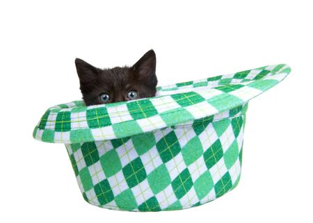One black kitten peaking out of a Saint Patrick's Day themed green checkered fedora style hat, isolated on white background. Fun holiday theme with cats