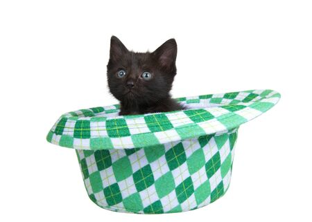 One black kitten sitting in a Saint Patrick's Day themed green checkered fedora style hat, isolated on white background. Fun holiday theme with cats