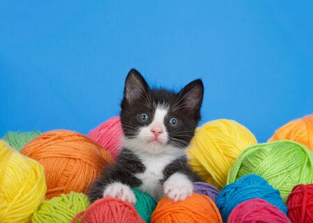 black and white tuxedo kitten sitting in a pile of yarn balls in various colors, looking up at viewer. Vibrant blue background with copy space