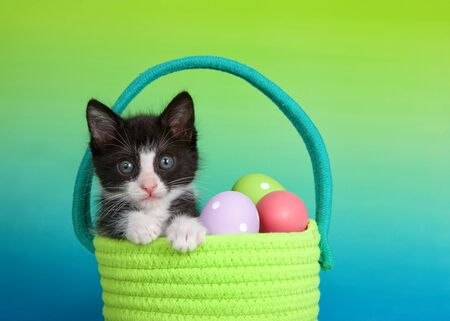 Black and white tuxedo kitten sitting in a vibrant green woven Easter basket, paws on edge. Colorful Easter eggs. Graded background blue to green.