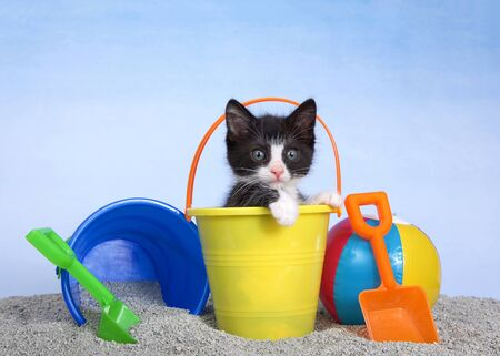 Tuxedo kitten in a yellow sand bucket with shovels and beach ball, blue bucket spilling litter box sand beside him. paws on edge of bucket looking slightly to viewers right. sky background.