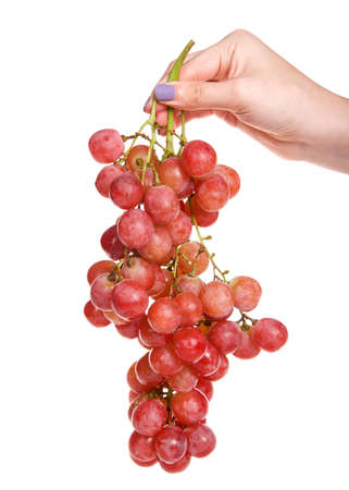 Caucasian hand holding bunch of ripe red grapes on the vine with water drops on them, isolated on white. Zdjęcie Seryjne