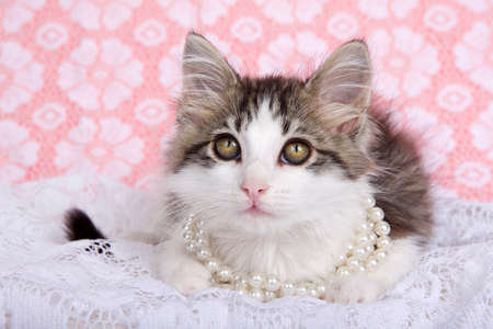 Cute gray and white tabby kitten wearing pearl necklace laying on white lace looking up at viewer. white lace over pink background with copy space Zdjęcie Seryjne