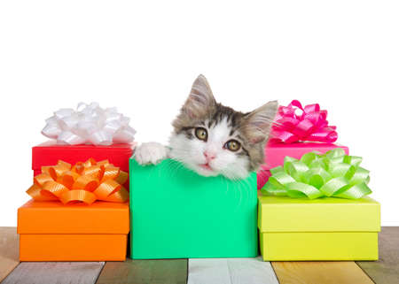 Adorable gray and white kitten laying in a green birthday holiday present surrounded by colorful presents with bows, looking at viewer. Isolated on white. Zdjęcie Seryjne
