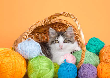Adorable gray and white kitten peaking out of a brown wicker basket with handle surrounded by balls of yarn, looking directly at viewer. Orange background.