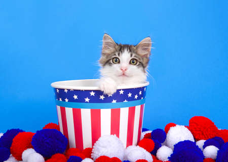 Adorable white and grey tabby kitten peaking out of a red white and blue stars and stripes patriotic bucket with one paw on the edge, looking at viewer. Yarn balls on floor, blue background.