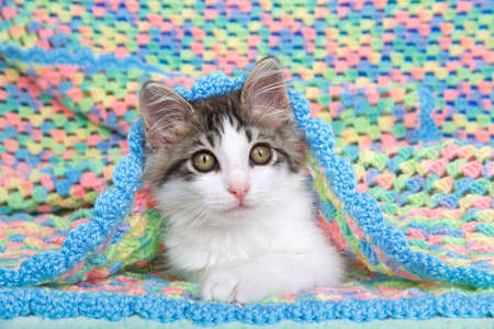 Portrait of a gray and white tabby kitten laying inside a handmade crochet multicolored baby blanket looking slightly to viewers right.